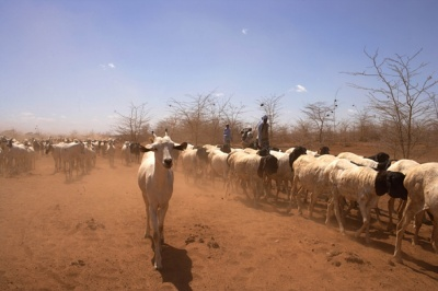 Integrated Soil - Water Conservation and Livestock Management in Zimbabwe