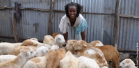 Sindayo, a sheep farmer in Tigray, Ethiopia