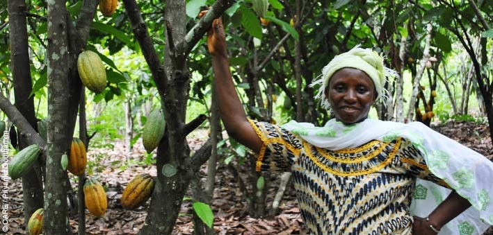 A cocoa farmer from Sikaboutou community