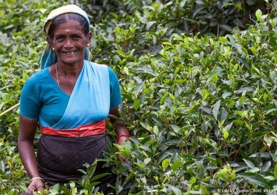 Tea worker, Sri Lanka