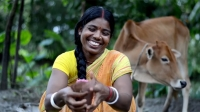 CARE's dairy value chain: Making markets work for smallholder farmers in Bangladesh
