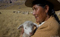 A Peruvian farmer with lamb