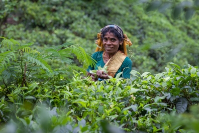 A tea picker in Sri Lanka