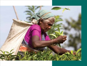 Empowering Workers on the Tea Sector of Sri Lanka