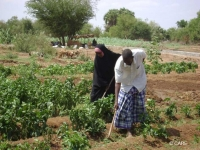 Farming a smallholding plot in Kenya